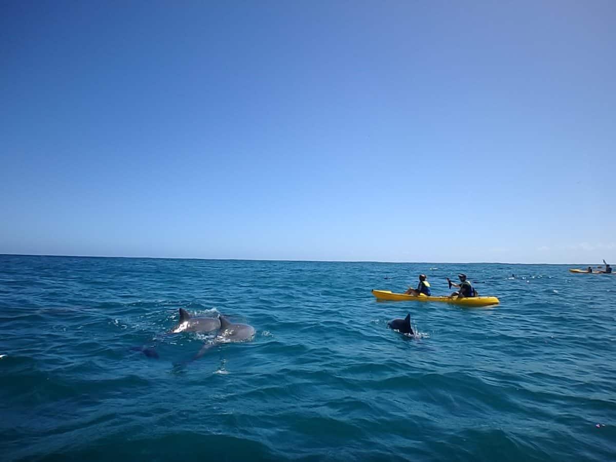 dolphin enounter