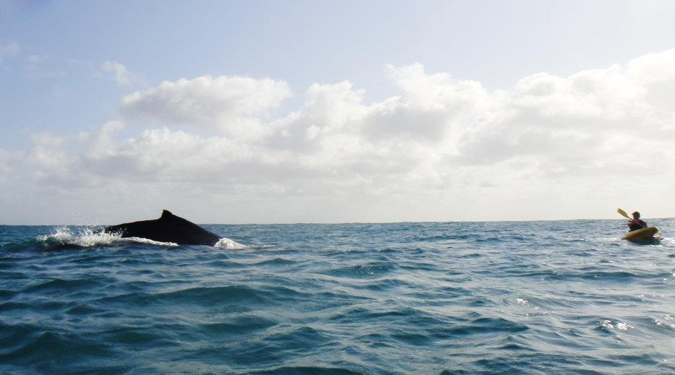 whale boat