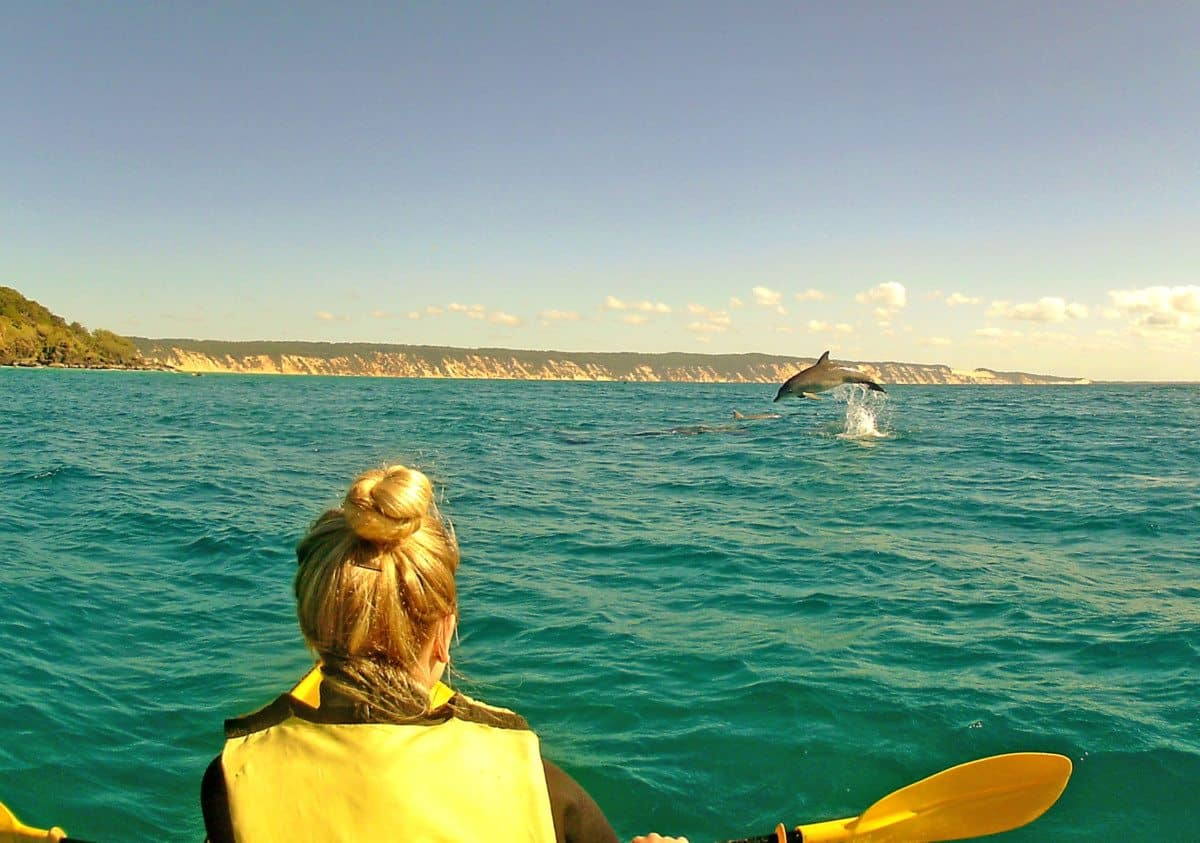 wild dolphin tour