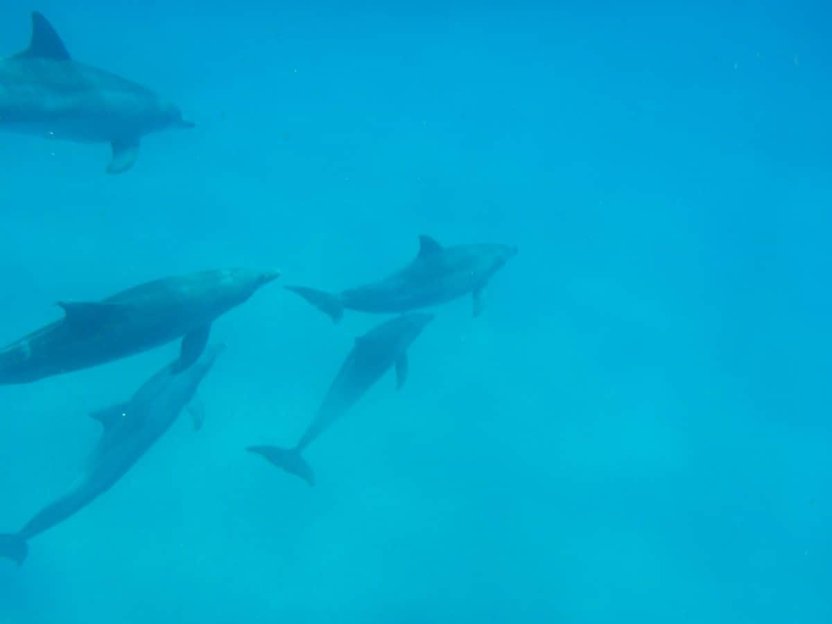 How dolphins communicate (and why you should leave your jet ski home!)