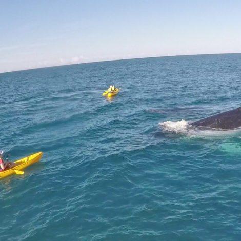 Humpback Whale Migration along the East Coast of Australia