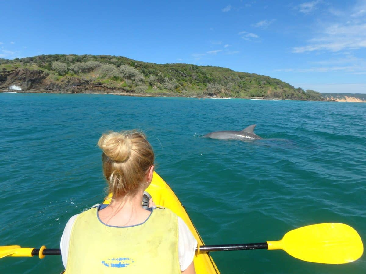 Kayak with dolphins - Rainbow Beach