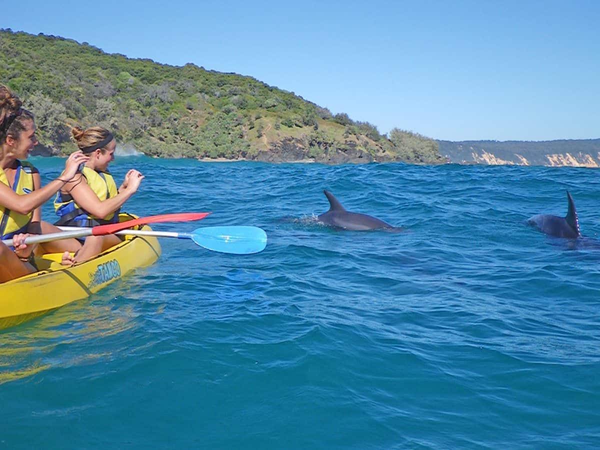 Dolphin kayaking Rainbow Beach & Noosa