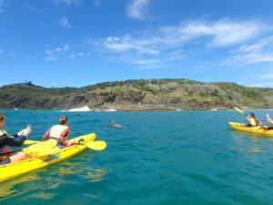 dolphin tour - Noosa & Rainbow Beach