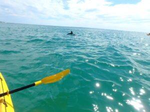 dolphin kayaking tour