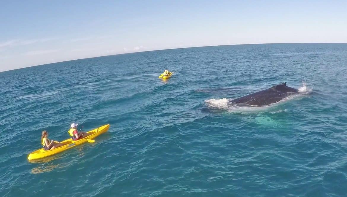 whales on kayak tour Noosa