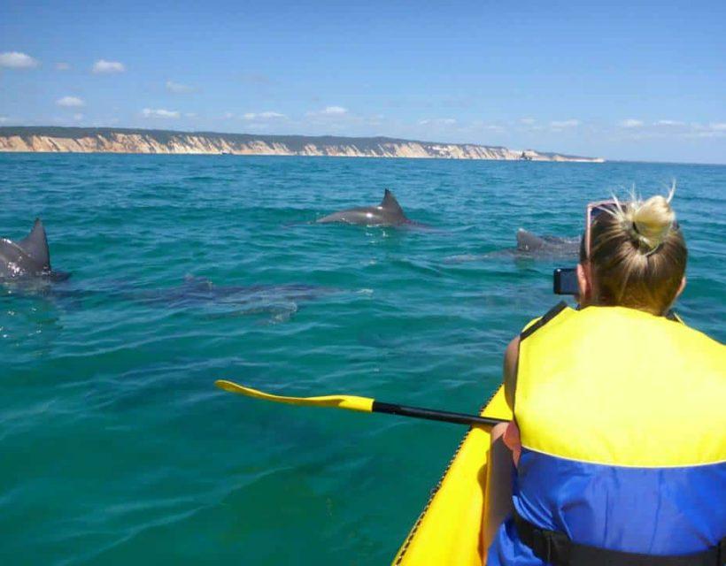 dolphin view sea kayaking